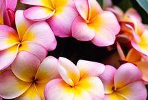 Blommande krukväxter / flowering houseplants