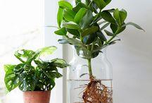 Växttrender / Gardening trends