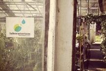 laboratorium / Zapraszamy do naszego laboratorium:   http://laboratorium.kwiatkibratki.pl