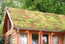 Sedumbedekking.nl / green roofs