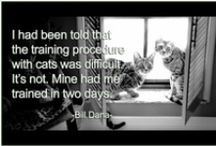 GR8 Cat Quotes / by noreen scully