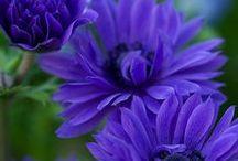 flowers / by Despo Michaelidou