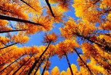 Autumn ~ Fall Colors / by Lucky McEskers