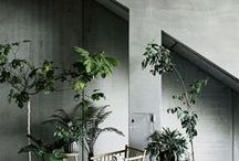 Plants / Cute plants, industrial and scandinavian style green spaces, nature meets concrete,  loft concrete jungles, nordic indoor gardening