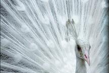 Amazing Animals / by Ariel Cellamare