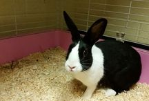 Rabbits For Rehoming / Rabbits in need of a home. Here you will find rabbits that can be adopted. Check the description below the image for details, including the location.
