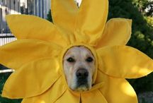 Pet clothes & fancy dress / We all love to celebrate the changing seasons & so do our pets, it would seem!  We love these pet outfits!