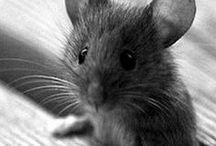 vive les souris / LES SOURIIIIIIS