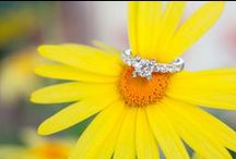 rings photography