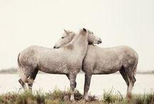 Animals: Horses & Kin / by Linda Murdock