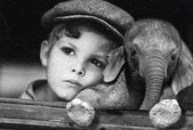 Animals: Elephants / by Linda Murdock
