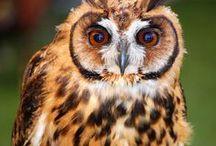 #. OWL.