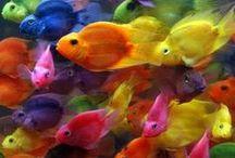 Fishies! / Beautiful, weird, crafty, cute fish.