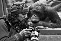 Animals Forever!
