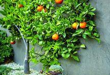 Garden Ideas / Outdoor inspiration.