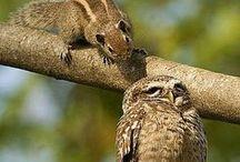 Mussols i companyia