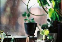 ogród | rośliny