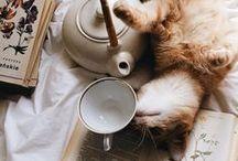 Cocooning - Hygge / Quand vient le besoin de calme, de solitude, d'introspection, cocooner est la meilleure façon de prendre soin de soi. Se recentrer sur soi, au chaud, avec un bon livre, un plaid et une tasse de thé. Le hygge des pays scandinaves en est un bon exemple. ☕