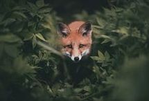 • ANIMAUX SAUVAGES • / Animaux | Sauvages | Nature | Grands Espaces | Wild | Animals  |