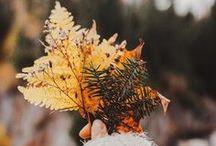 Automne / Toute la douceur de cette saison : paysages, feuilles qui tombent, rituels automnaux, légumes de saison, cocooning... L'automne est la période du repli sur soi, du retour au calme, l'activité diminue, la nature se prépare à l'hiver. C'est une saison qui sent bon le thé aux épices, les feux de cheminée et la douceur des plaid. Beaux mois d'automne !