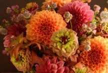 Delightful Dahlias / The Dahlia....A beautiful flower in a variety of sizes, shapes and colors!