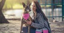 Dog stuff in pink / Dog, pink, stuff, collars, dots, walking, handbag, weistbag