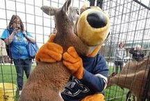 All things Zippy! / A kangaroo we all know and love, better know as The University of Akron's school mascot, Zippy! Zippy loves to take pictures. Share some of your moments with Zippy with us!