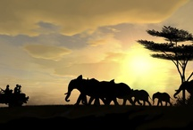 Kabo Safari
