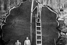Logging history / by Jill Bennett