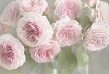 Beautiful flowers / Flowers you want to look at every day / by Kassandra Athina