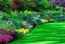 Ogród (Garden)