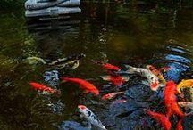 Oczko wodne (Pond)