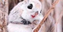 Baby Animals <3