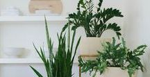 interior greenery / Inspiration to turn your home green, inside and out!
