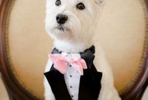 Wedding Pets / Passionate about helping you look and feel confidently beautiful. Visit AmandaBadgleyDesigns.com for more inspiration