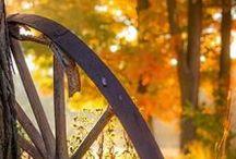 Autumn / Syksy
