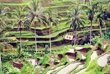Travel to Bali / Planning your trip to Bali, travel guides, ideas and places to visit in Bali. What to do and see in Bali?