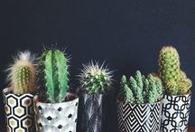 Terrarium/plants / Plants/cute terrariums