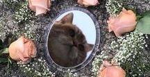 Pure Cats / catscatscatscatscatscatscatscats