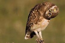 OWLS (¯`v´¯)¸.·¨¯` ♥ / Las amo, son mágicas ♔