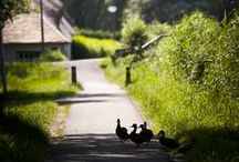 Zomer in Wilgenrijk / Fotografe van dienst Sophia van den Hoek maakte een impressie van de zomer in Wilgenrijk.