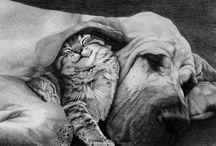 Animals true loves