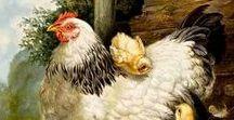gallitos y gallinas