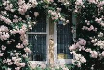 Gardens / by PinterestEK