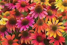 Gardening - Flowers - Landscapes / Gardening Remedies, Design, Tips & Recycling