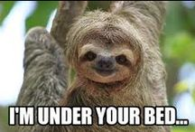 rape sloth. #spankme / so creepy...so funny... / by Britt Judge
