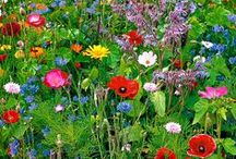 Gardens and Flowers / Flowers in nature and in gardens or more formal parks