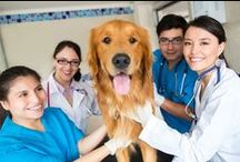 Veterinary Assisting / Ashworth's online Veterinary Assistant program was developed to provide instruction based on National Association of Veterinary Technicians in America (NAVTA) recommended Essential Skills for Assistant Training.  Learn more at: https://www.ashworthcollege.edu/career-diplomas/veterinary-assisting/ / by Ashworth College