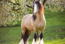 Horses / Amazing photos of horses...