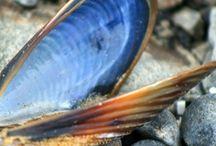 Mussels, moules, mosselen.